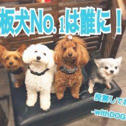 看板犬の総選挙開催中!!!