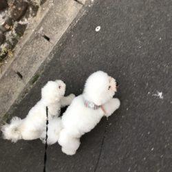 同じ犬種だから?